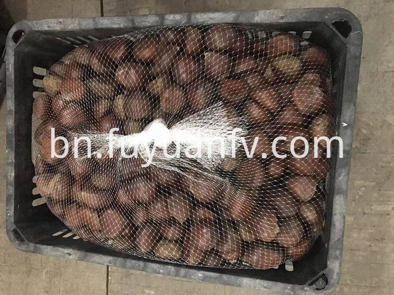 chestnut for USA market