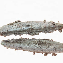 Gefrorene Bonito Skipjack Steaks Vorgekochter Thunfisch Gestreifte Lende
