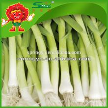 Epilation entière de feuilles d'ail aux légumes frais