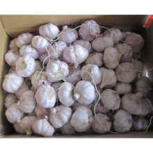 Exportar nueva cosecha Fresh Good Quality Normal White Garlic (4.5 / 5.0)
