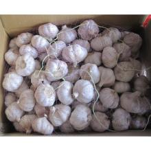 Exportation de nouvelles cultures fraîches de bonne qualité Ail blanc normal (4.5 / 5.0)