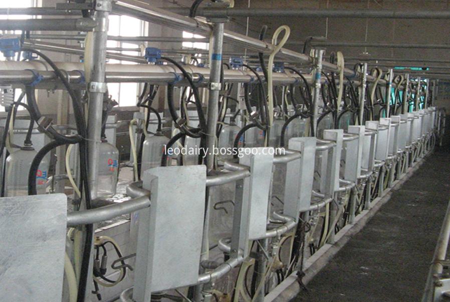 midset milking parlor
