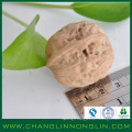 alibaba golden supplier high protein for usa dry walnut shell