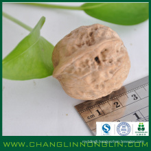 new prodcuts full of high protein Walnut in shell for leisure time food