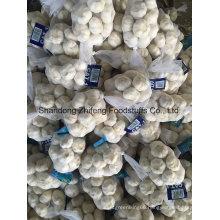 High Quality Fresh Chinese 5.0-5.5cm Garlic