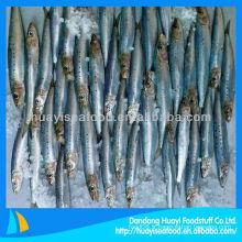 Sardine fraîche congelée en vente