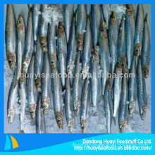 frozen fresh sardine on sale