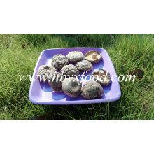 Cogumelo de Shiitake liso secado 1kg