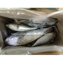 Todo o peixe IQF Bonito (750g +)