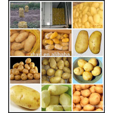 chinese fresh potatoes/hot sale patatoes