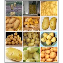 китайский свежий картофель/горячая картошка продажи