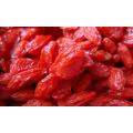 freeze dried goji berry