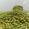 Getrocknete grüne Großbohne / runde Bohne, keimende Art