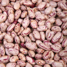New Crop Oval Shape Light Speckled Kidney Bean