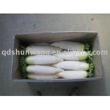 2011 radis blanc frais