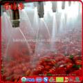 Buy goji berries plants health benefits of goji berries the benefits of goji berries