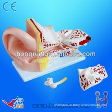 Modelo anatómico de oído grande de ISO, modelo de oído anatómico, oído de la anatomía