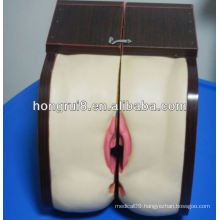 Advanced Female IUD Training model,intrauterine device
