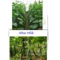 Fertilizante orgánico de algas marinas de alta calidad