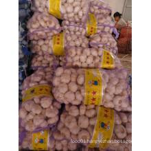 Big garlic/Alho bulbs/Ail/garlic price per ton from China