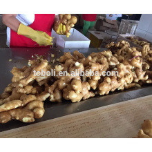 Chinese organic ginger