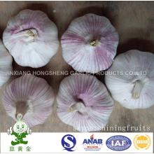 Fresh Jinxiang Normal Ajo Blanco Nuevo Cultivo 2016