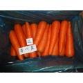 Cenoura doce fresca preço barato