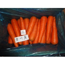 Cheap price fresh sweet carrot