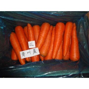 Морковь свежая сладкая дешевые цены