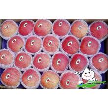 Frische Apfel Früchte zum Verkauf Porzellan Fuji Apfel Früchte