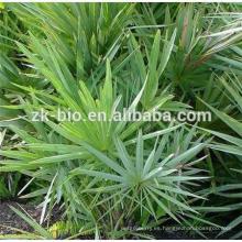 Polvo de Extracto de Palmetto de Sierra de Plantas Naturales