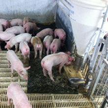 Rubber Sow Bed Farrowing Pens Stall Pig Livestock Mat/Non Slip Rubber Pig Mat