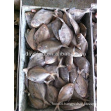 supply Pomfret