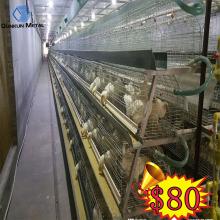 Trang trại mạ kẽm thép gia cầm lồng cho gà con