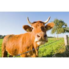 Коррозионностойкая сталь шарнир поле забор/овец забор в рулоне/животная загородка сетки