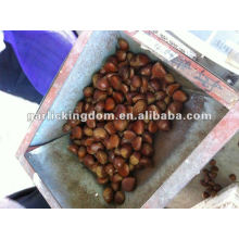 40-60pcs/kg Fresh Chestnut