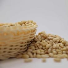 edible pine nut kernels big size