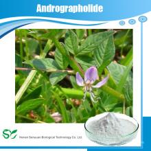 Vente chaude d'extrait de feuilles de Andrographis / Andrographolide 95% / Andrographis Paniculate Extract extrait de plante