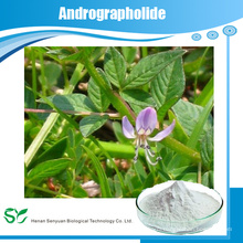 Hot sale Andrographis leaf extract/Andrographolide 95%/Andrographis Paniculate Extract plant extract