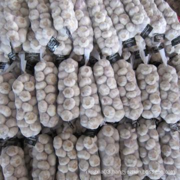 new crop China/Chinese fresh garlic normal white garlic for wholesale