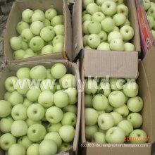 Gute Qualität Karton Verpackung Frische goldene Apfel