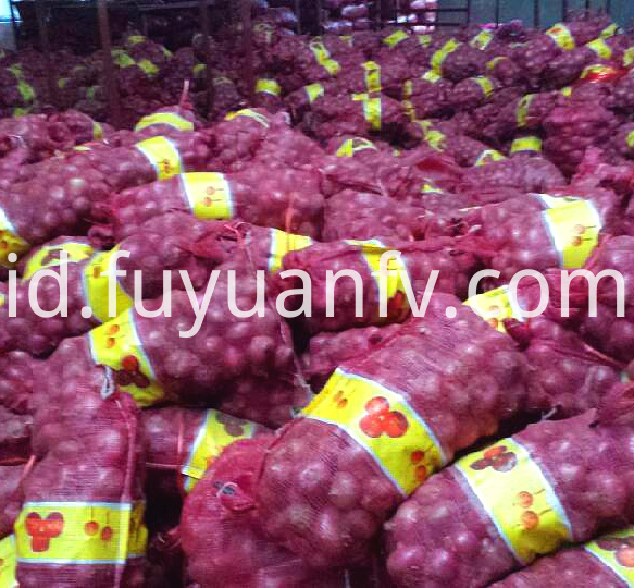 Onion Jinxiang