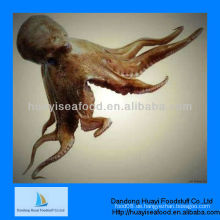 Blume eingegeben gefrorene Oktopus ganz gereinigt