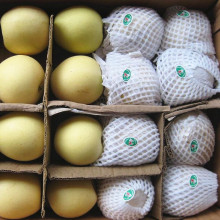 New Season High Quality Golden Pear/Crown Pear