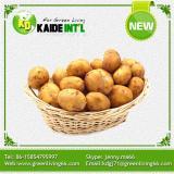 Best Fresh Potatoes New Price 2016