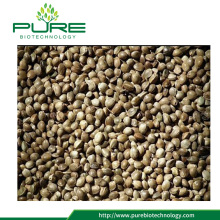 Premium Quality Hemp Seeds