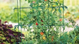 Tomato plant support cage