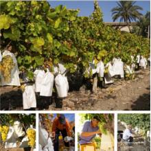 Pulpa de madera blanca de alta calidad del papel de la uva de Micropore de la pulpa de la fruta que llena el bolso protector con el alambre galvanizado