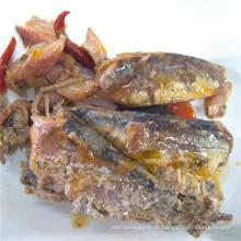 Sardinenfisch in Dosen in Tomaten mit Chili