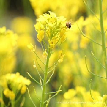 white rapeseed honey